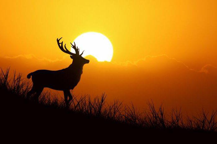 цитаты про экологию и природу