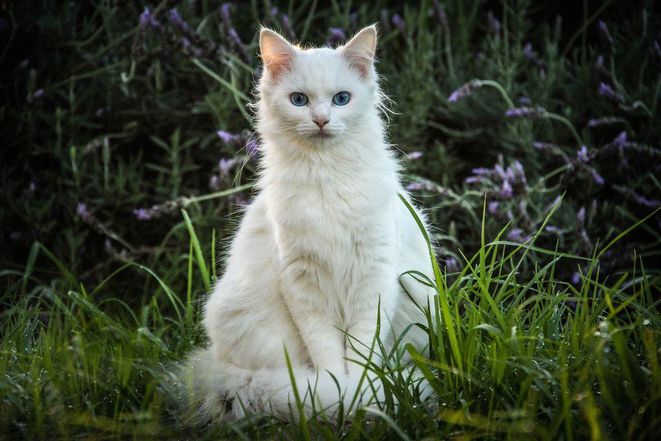картинки белого кошки знаки, которые зачастую