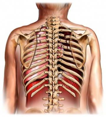 Перелом ребер - код по мкб 10, симптомы и лечение