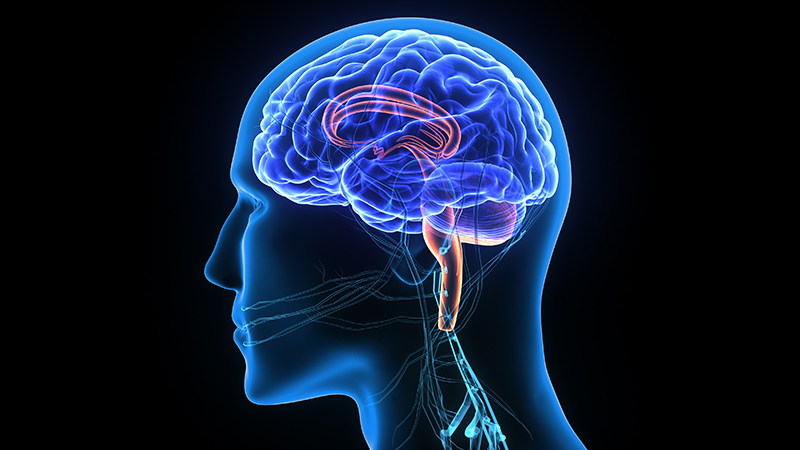 неврология в картинках добиться идеального