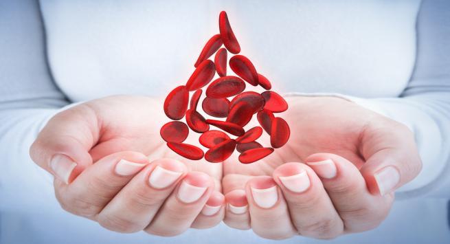 плазма крови сдача польза