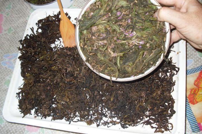 Копорский чай приготовления
