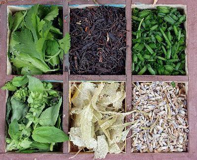 Травы для снижения аппетита