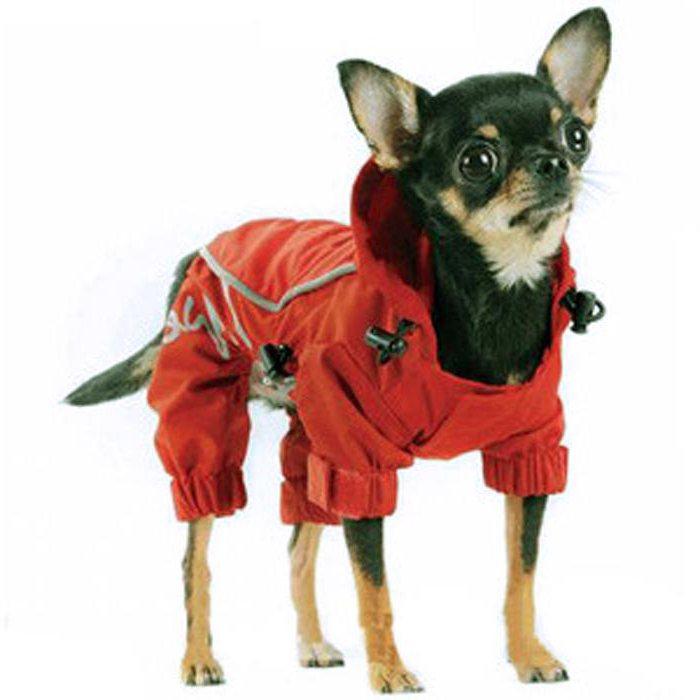 вязание выкройка одежды для собак мелких пород