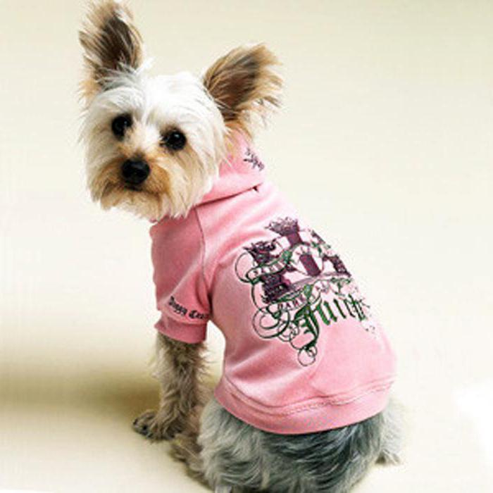 одежда для собак своими руками выкройки идеи