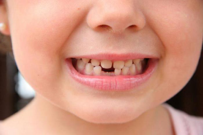 первый зуб моляр