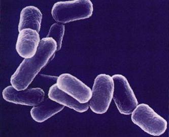 Бета-лактамный антибиотик при инфекции
