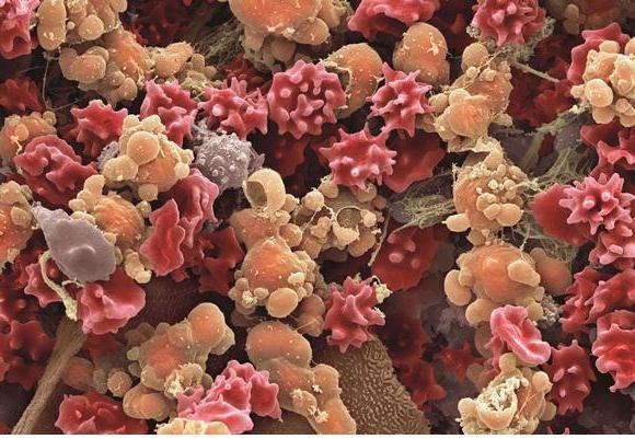 Механизм действия бета-лактамных антибиотиков