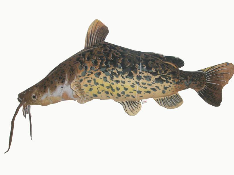 Усатая рыба-подушка
