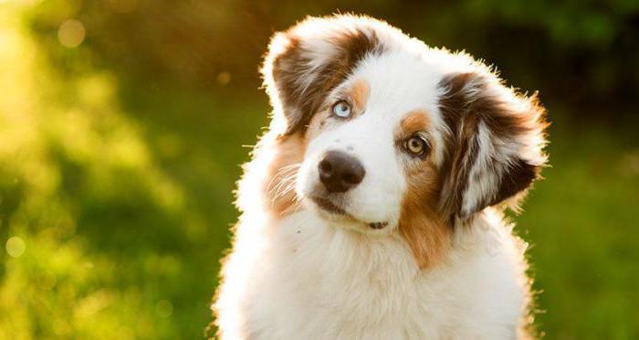 удаление жировиков у собак