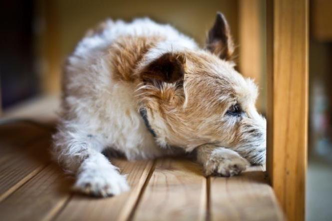 жировики у собак что делать