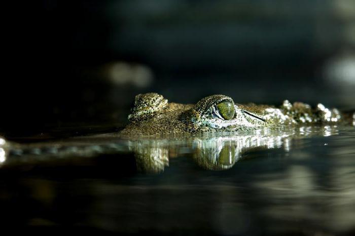Наркотический секс под крокодилом