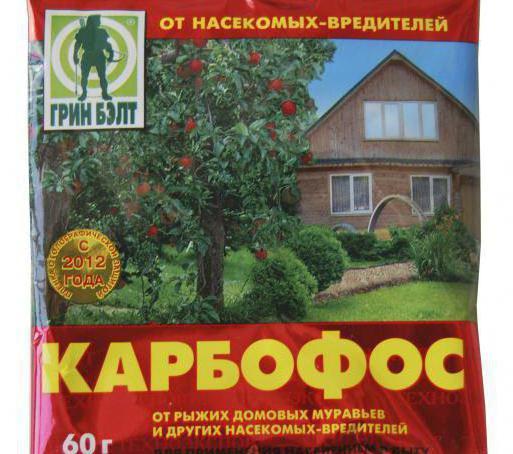 Восточная плодожорка на персике
