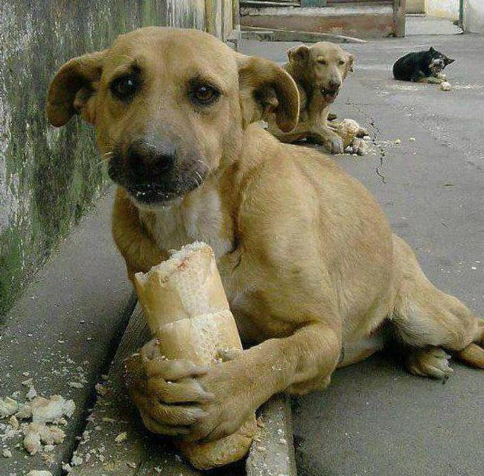 Картинки жалкой собаки