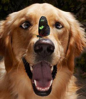 Стоп зуд суспензия для собак