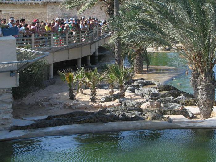 остров Джерба, крокодиловая ферма