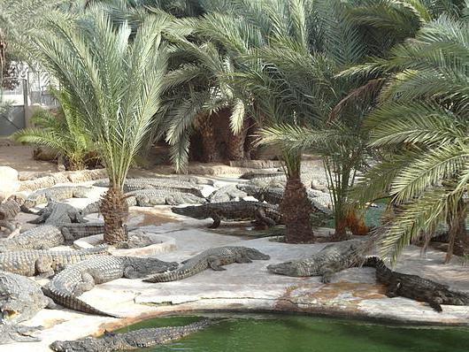 крокодиловая ферма Джерба, отзывы