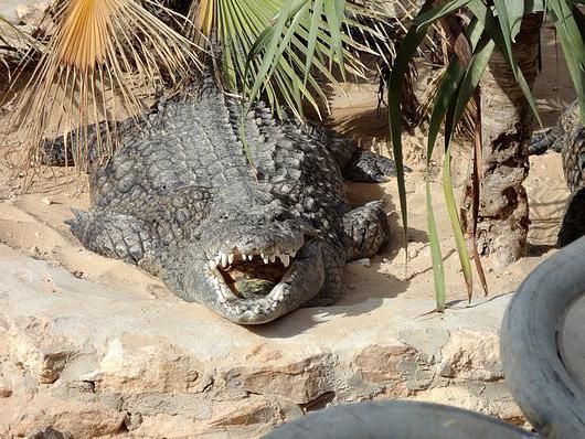 Крокодиловая ферма Джерба стоимость