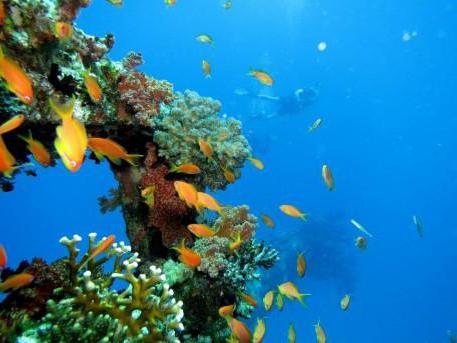 глубина Красного моря