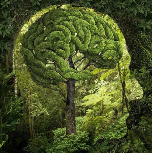 бережное отношение к природе аргументы из литературы