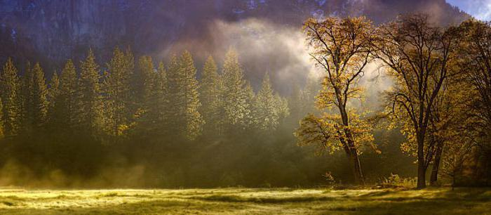 бережное отношение к природе сочинение аргументы