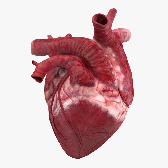 Картинки человеческого сердца с надписями