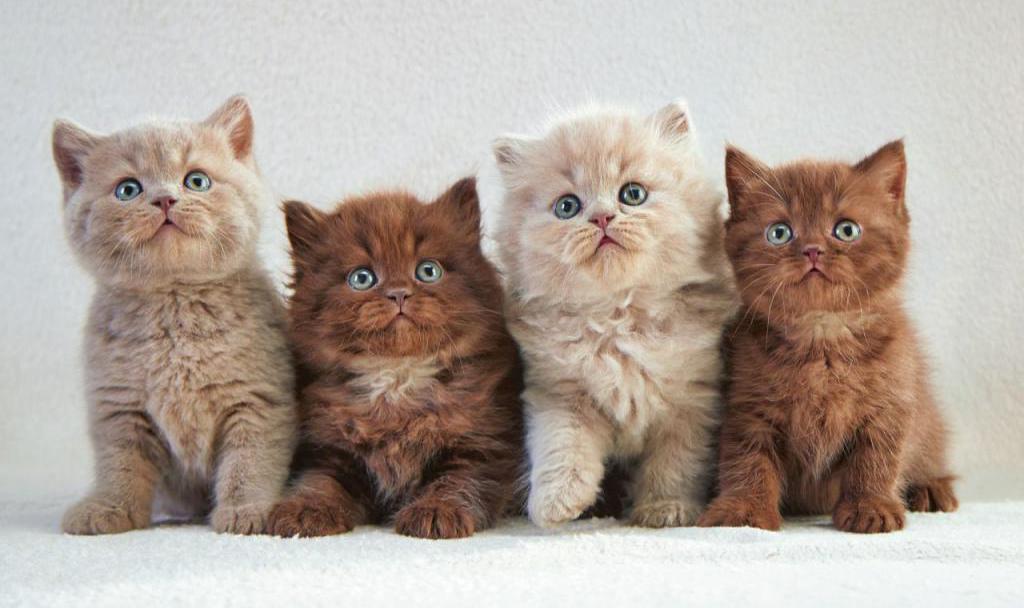 Несколько фотографий одного котенка