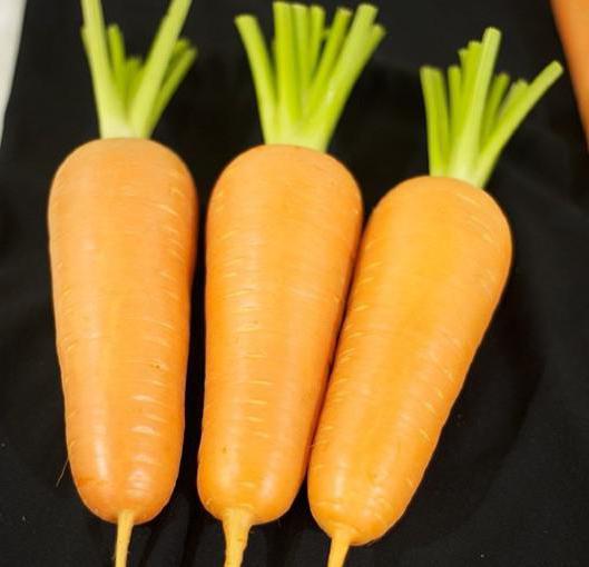 морковь абако отзывы