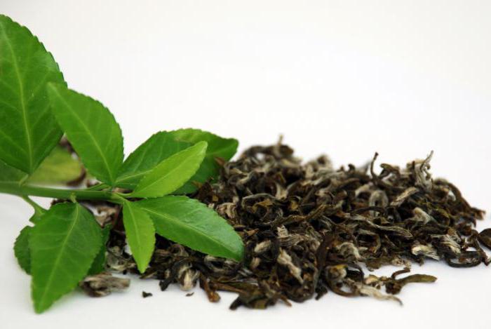можно ли чай при похудении