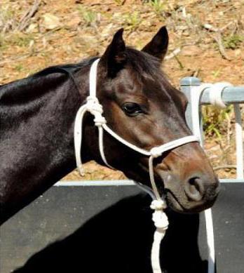недоуздок для лошадей