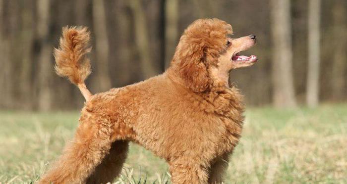 Собака сильно линяет что делать