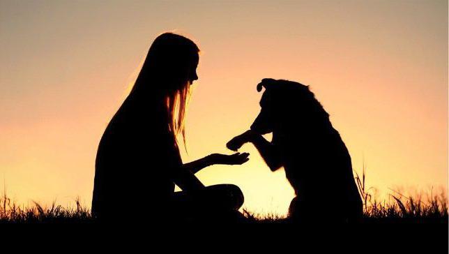 Психология собак. Основы дрессировки животных