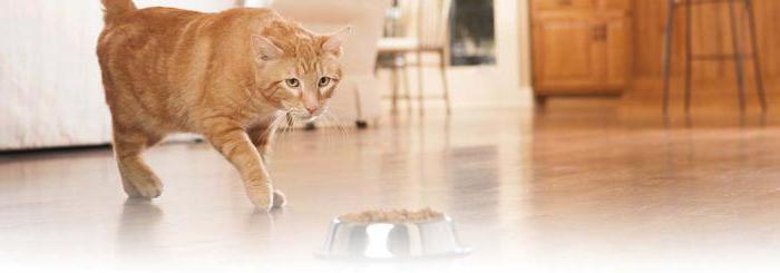 Беззерновые корма для кошек как кормить thumbnail