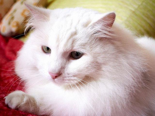Кот хочет кошку как он себя ведет