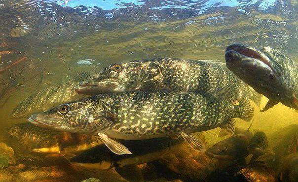 рыбалка в Сызрани