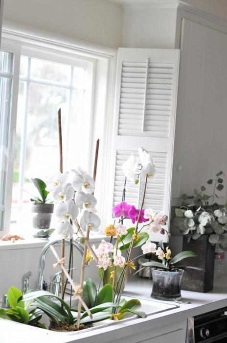 можно ли держать дома орхидею