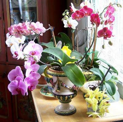 орхидеяможно ли держать дома приметы