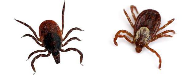 отпугиватель насекомых влияние на здоровье человека
