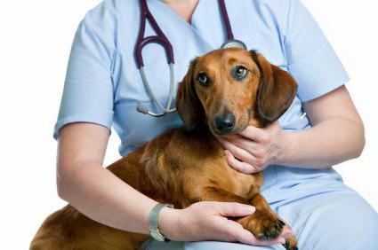 Мастоцитома у собак лечение