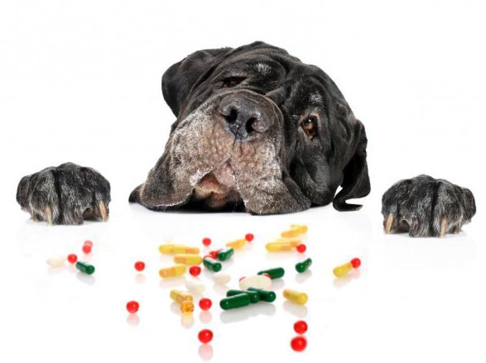 Тучноклеточная опухоль у собак