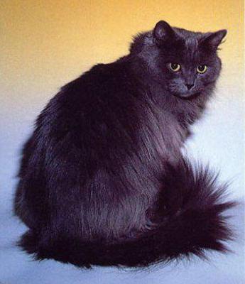 Смешанная порода кошек