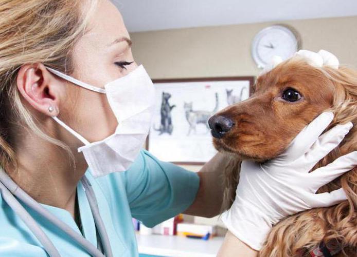 почечная недостаточность у собак симптомы и лечение