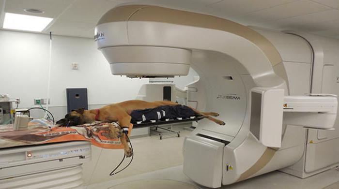 у собаки опухоль молочной железы чем лечить