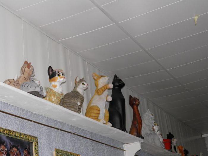 ветклиника музей кошки всеволожск