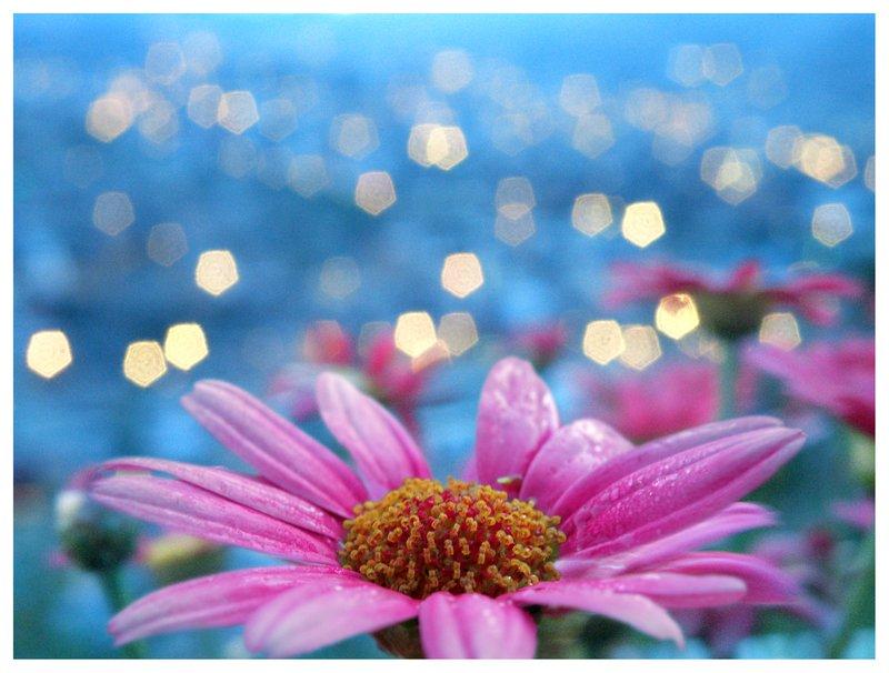 фото с эффектом боке цветок