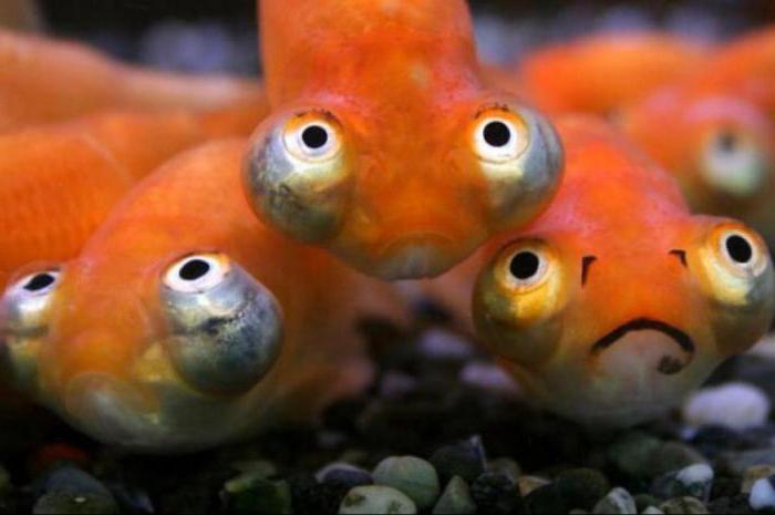 рыба смешная фото
