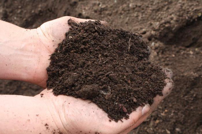 глинистая суглинистая почва