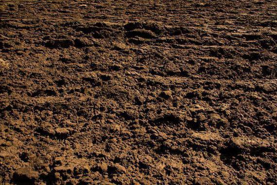 суглинистые и супесчаные почвы