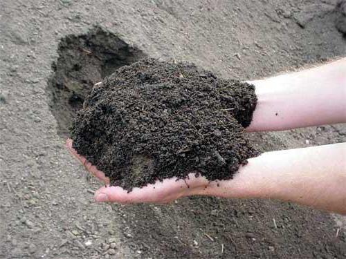 суглинистая почва что это такое