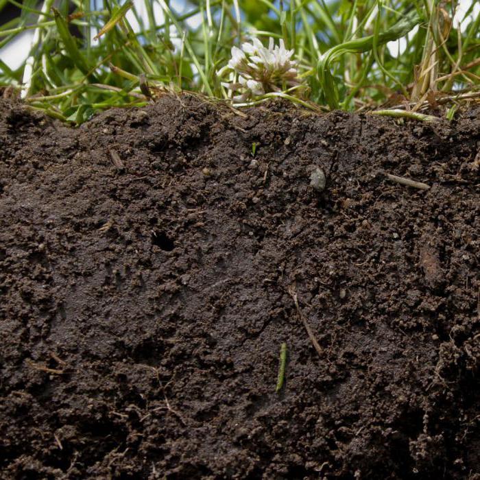 растения на суглинистой почве